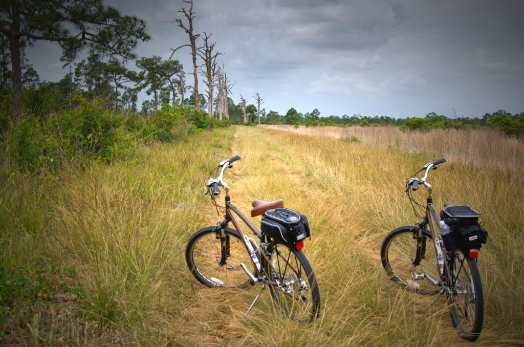 nature woods bikes bicycles trails fields 1425623 pxhere.com  1