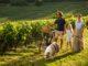 viñedos franceses de la región de La Champagne