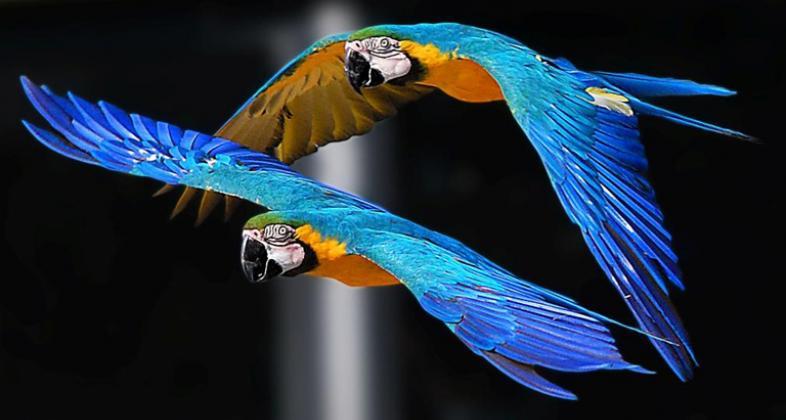 Exhibición de aves exóticas. Autor: Zoo Aquarium de Madrid.