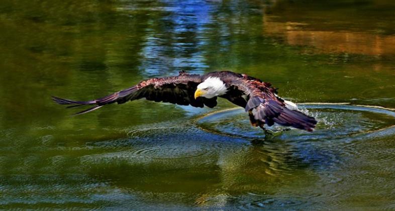 Aves rapaces. Autor: Zoo Aquarium de Madrid
