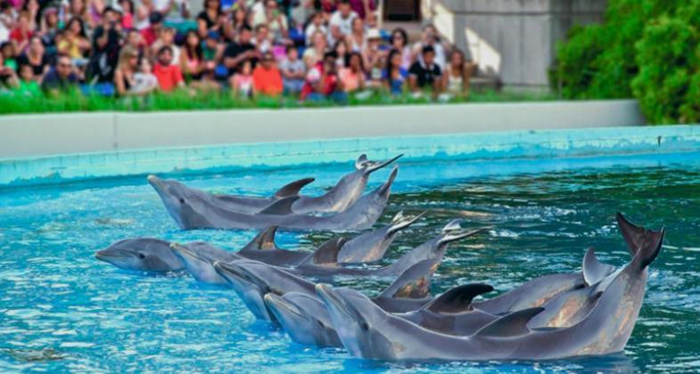 Exhibición de delfines en el Zoo Aquarium de Madrid.