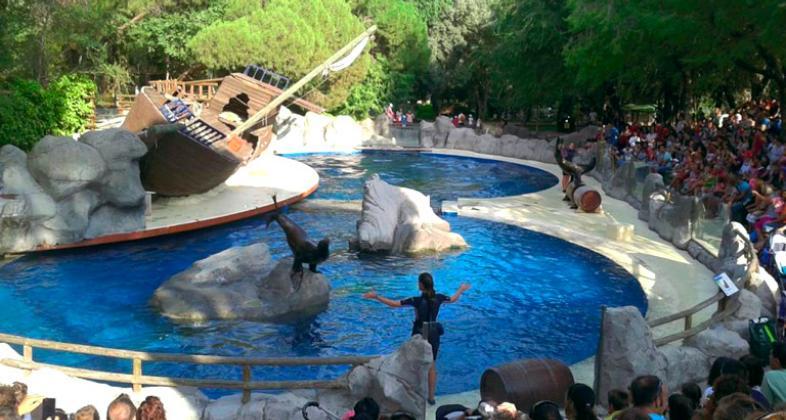 Leones marinos. Autor: Zoo Aquarium de Madrid.