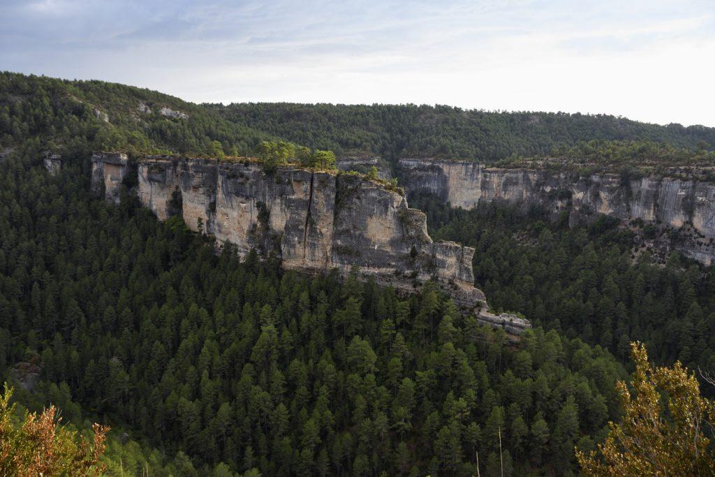 Bosques en el entorno del río Cuervo