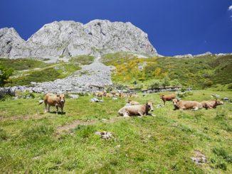 Pico Torres (Asturias)