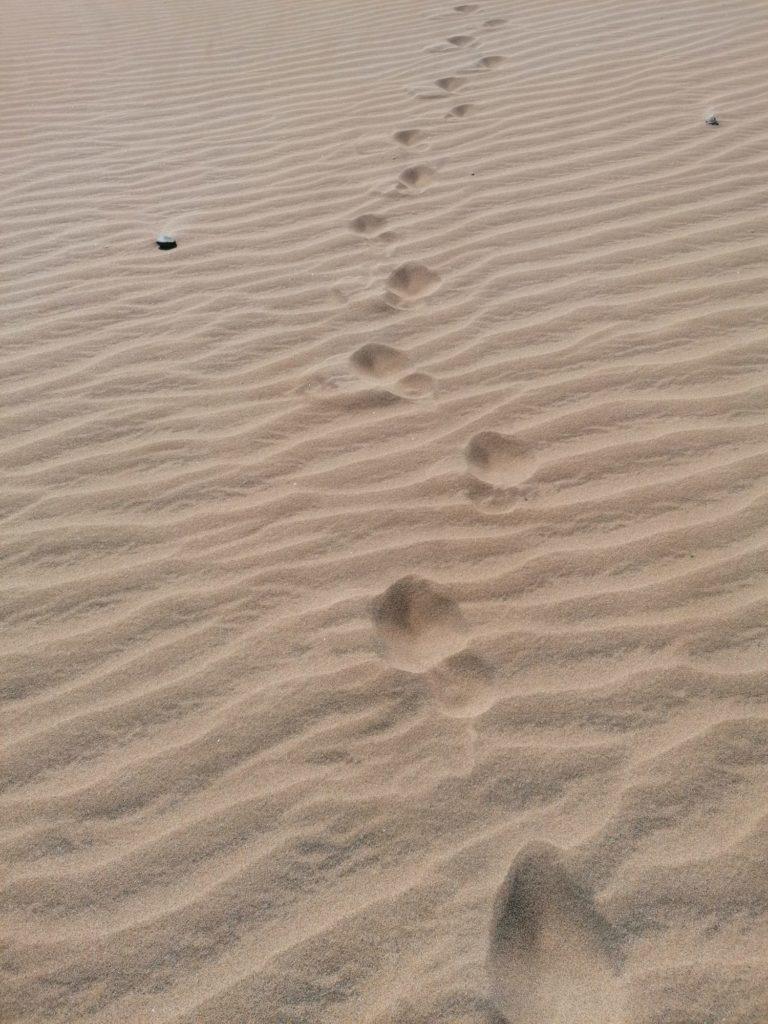 maspalomas marga playa