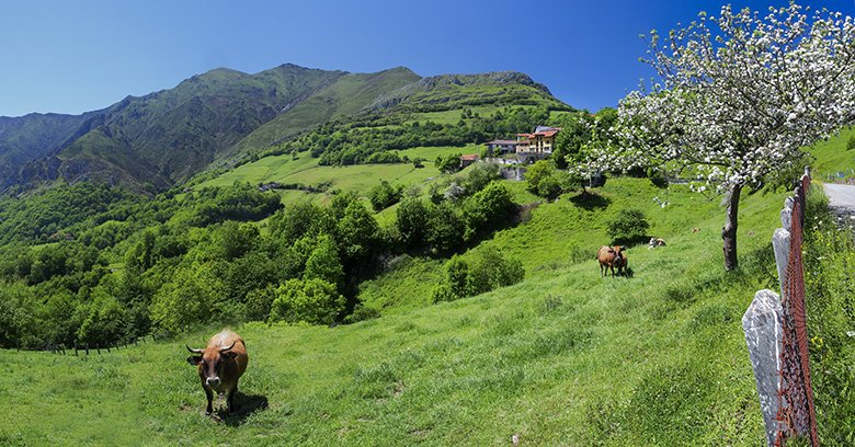 Gamoneu de Onís (Picos de Europa, Asturias)