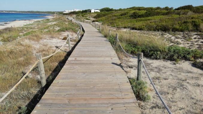 Paseo entre las dunas de la playa de Migjorn.